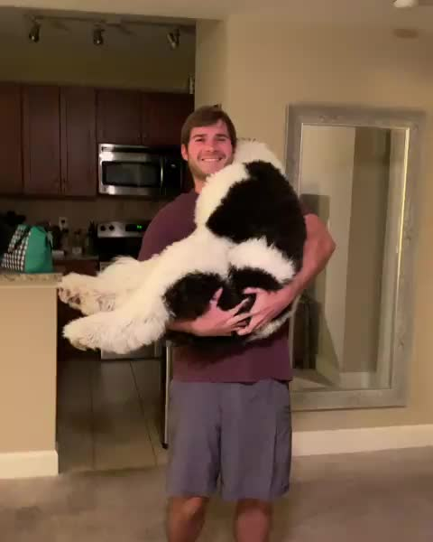 Never too big to be held GIFs
