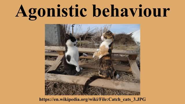 Watch Agonistic behaviour GIF on Gfycat. Discover more related GIFs on Gfycat