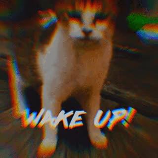 Watch and share Wake Up GIFs and Cat GIFs by Hearst Fujingaho / Hearst Digital Japan on Gfycat