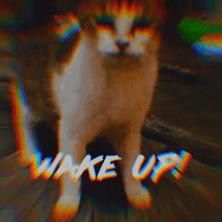 cat, cats, cute, hearst, neko, wake up, wakeup, wakeupcat, WakeUpCat.gif GIFs