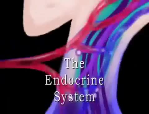 Watch and share Endocrine System Animation GIFs on Gfycat
