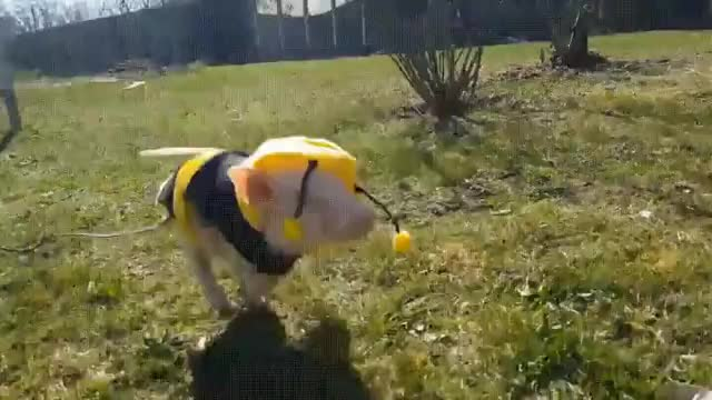 Watch and share Bee GIFs on Gfycat