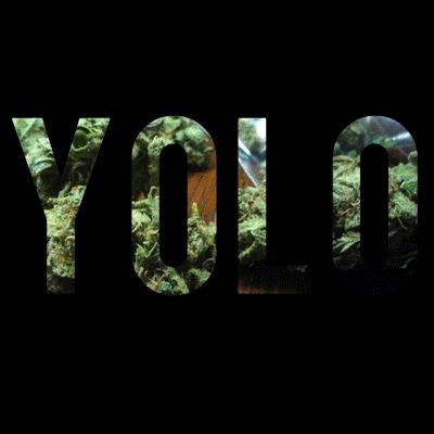 fuckit, yolo, young, Yolo GIFs