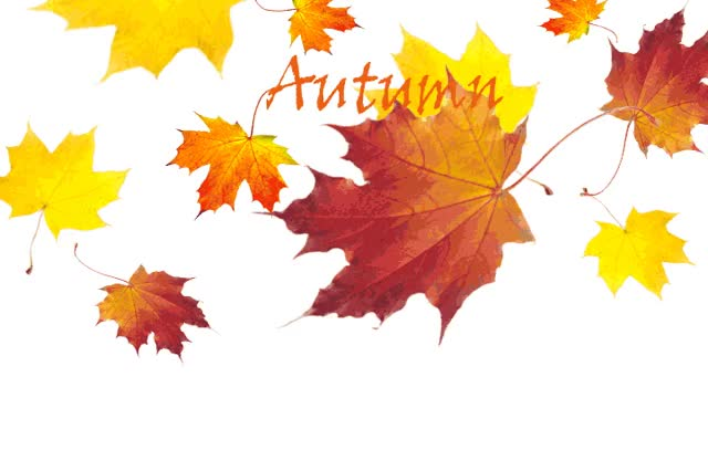 Watch and share Autumn GIFs on Gfycat