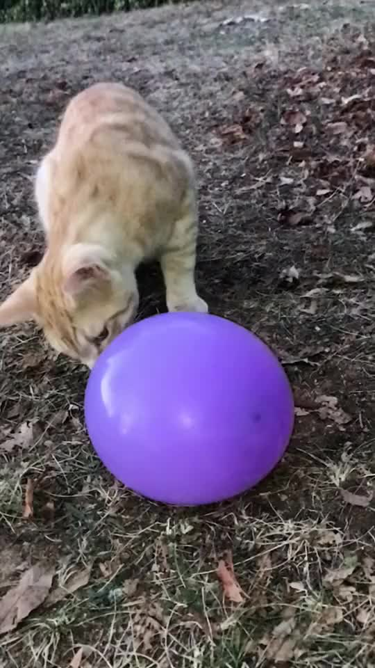 Watch and share Ballon GIFs and Slowmo GIFs by TikTok on Gfycat