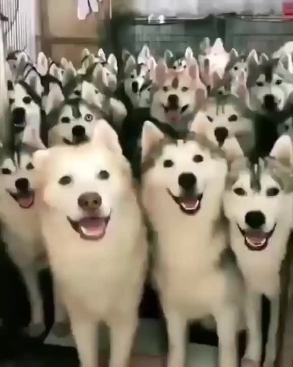 Watch apbn4trehw911 GIF on Gfycat. Discover more dog GIFs on Gfycat