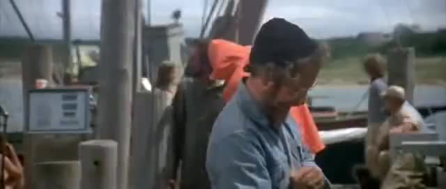 "Watch Jaws - ""It's a tiger shark"" GIF on Gfycat. Discover more shark, what GIFs on Gfycat"