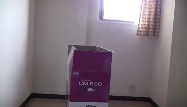 Watch Maru GIF on Gfycat. Discover more box, cat, cute, funny, maru GIFs on Gfycat