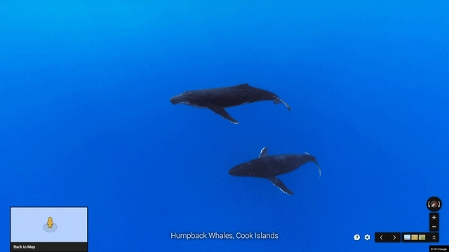 Humpback Whales Cook Islands hyperlapse GIFs