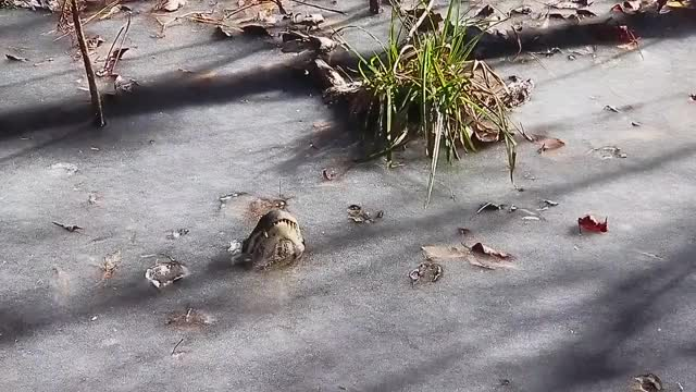 Watch and share Alligators In Ice   /r/NatureIsFuckingLit GIFs on Gfycat