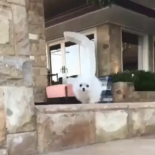 Watch and share Aww GIFs by joffas11 on Gfycat