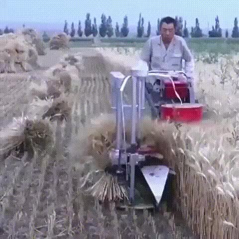 Watch and share Гифки-азиаты-комбайн-пшеница-5731086 GIFs on Gfycat