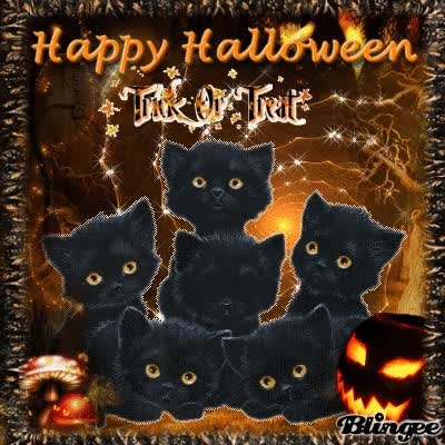 Watch and share Happy Halloween Cat GIFs on Gfycat