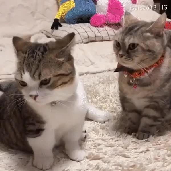 Watch and share 마법 Vs 물리 GIFs on Gfycat