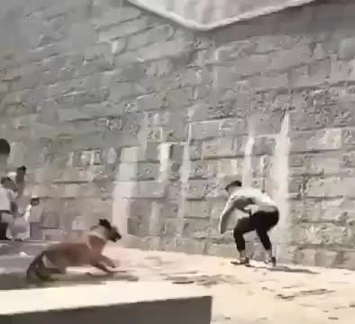 Watch and share Parkour-Pupper GIFs on Gfycat