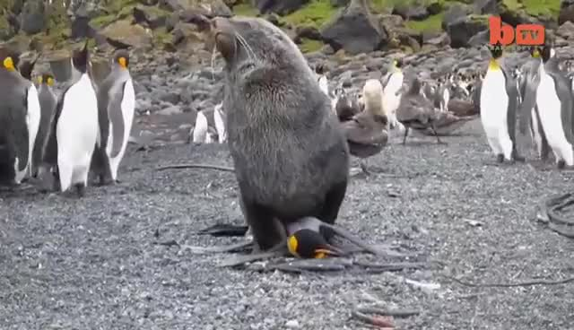 Watch and share Poor Penguin GIFs on Gfycat