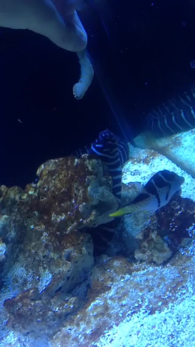Watch My Edited Video GIF by @classy on Gfycat. Discover more Aquariums, youtube editor GIFs on Gfycat