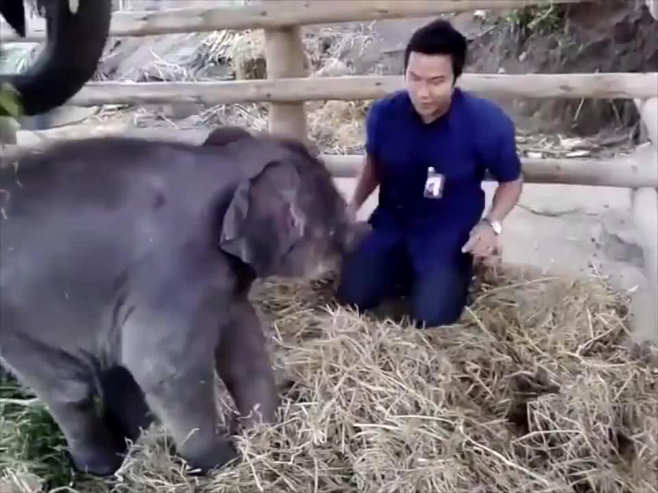 Entertainment, Muhammad Naveed, baby, elephant, playing with a baby elephant, Playing With A Baby Elephant GIFs