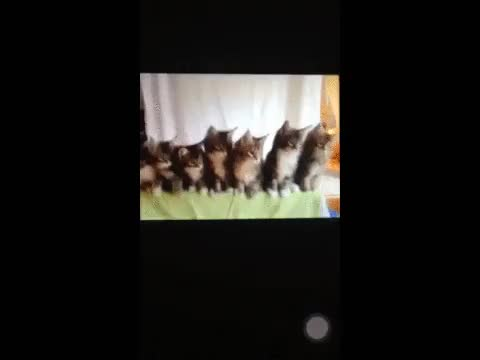 Watch and share Kitten GIFs by Danno on Gfycat
