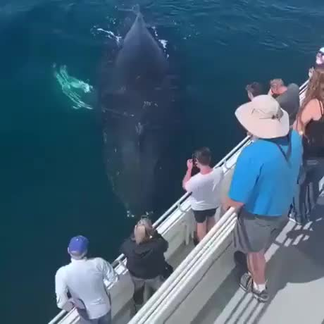 Watch and share Humpback Whale Gets Up Close And Sprays Everyone GIFs by hellsjuggernaut on Gfycat