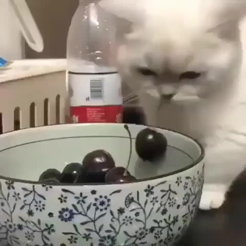 our favorite cats ❤, I'l take one😀, nobody will even notice😎😎 From: unknown GIFs