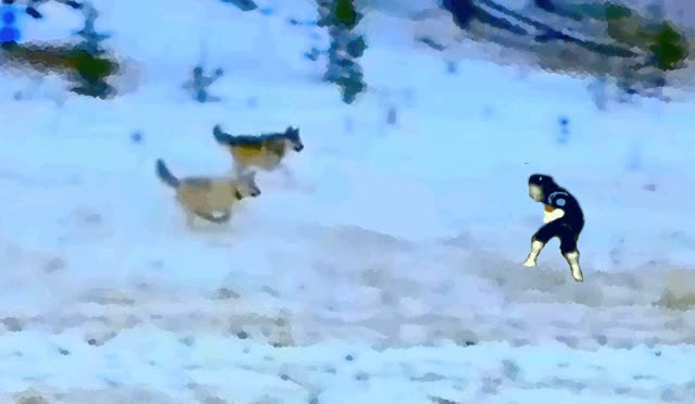 Watch and share Wolves GIFs on Gfycat