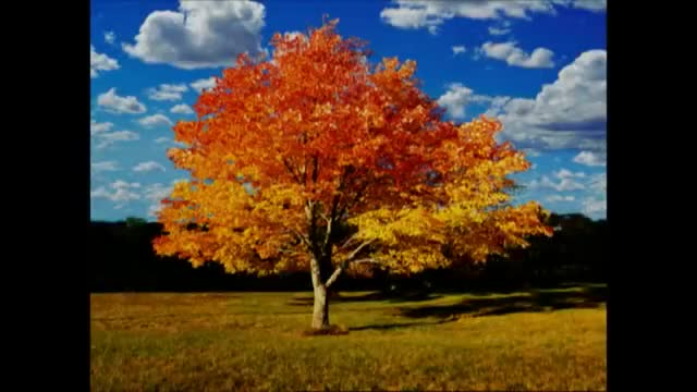 Watch and share Autumn Tree GIFs on Gfycat
