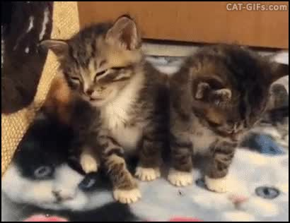 Watch and share 26 GIFs by LincesaMdq on Gfycat