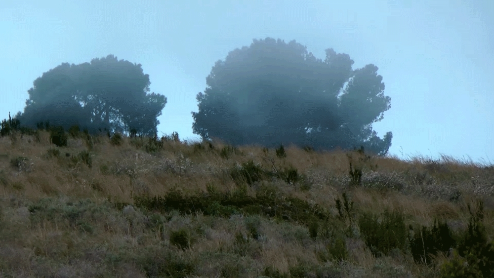 cinemagraphs, Wind GIFs