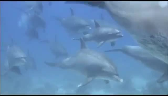 Watch Dolphins GIF on Gfycat. Discover more related GIFs on Gfycat
