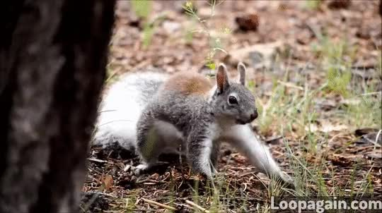 Watch and share Dancing Squirrel GIFs on Gfycat