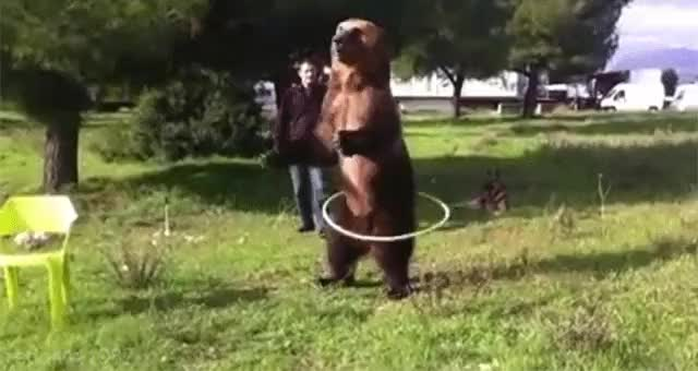 Watch and share Hula Hoop GIFs and Bear GIFs on Gfycat