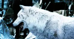Watch and share Game Of Thrones GIFs and Not Gonna Lie GIFs on Gfycat