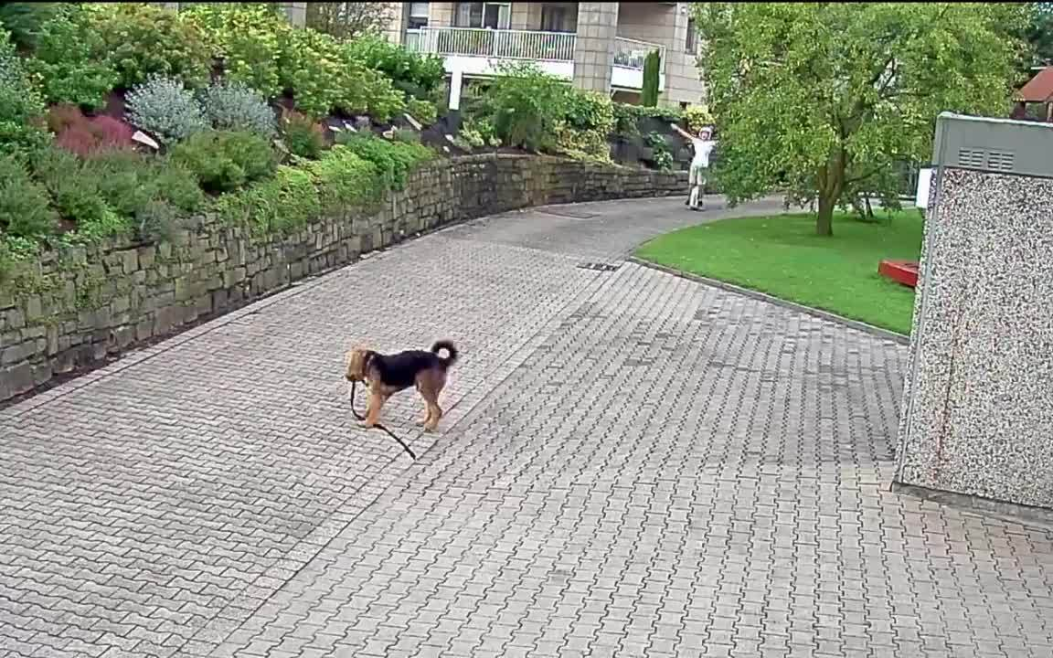Dogberg, animalsbeingjerks, hitmanimals,  GIFs