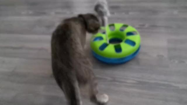 Watch Testing the new toy GIF on Gfycat. Discover more catgifs GIFs on Gfycat