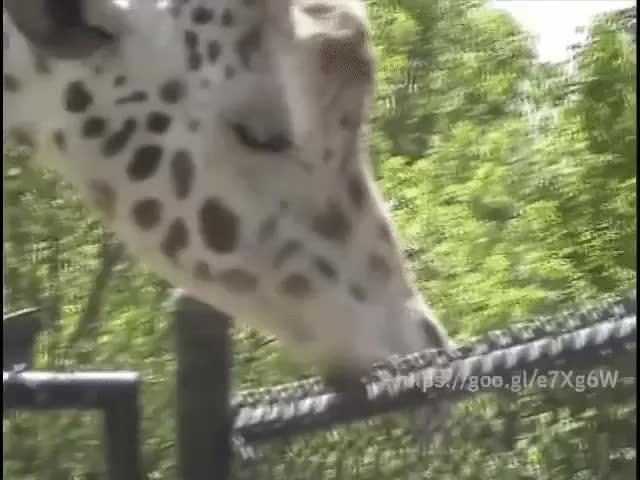 Watch this GIF on Gfycat. Discover more Braveryjerk, CringeAnarchy GIFs on Gfycat