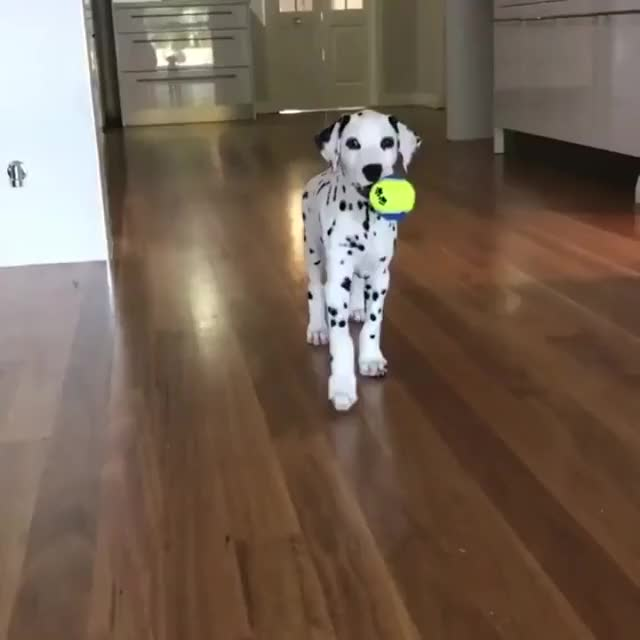 Watch and share Adorable Dalmatian GIFs on Gfycat