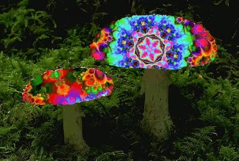 Watch Mushrooms GIF on Gfycat. Discover more related GIFs on Gfycat