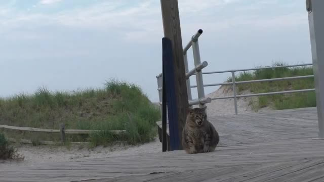 Watch Chubby Kitty Stretching on the Boardwalk GIF on Gfycat. Discover more aww, cute, kitty GIFs on Gfycat