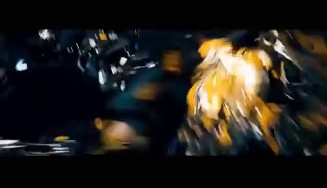 Watch and share Bumblebee Fight GIFs on Gfycat