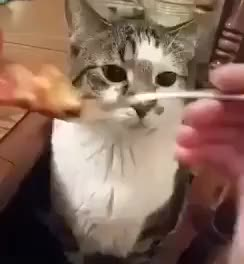 Watch this disgust GIF by John Dodini (@johnd) on Gfycat. Discover more aww, cat, disgusting, ew, eww, ewww, gag, gross, no thanks GIFs on Gfycat