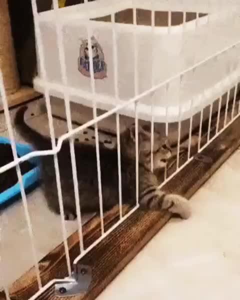 cat, cats, kitten, unexpected, Kitten wants out GIFs