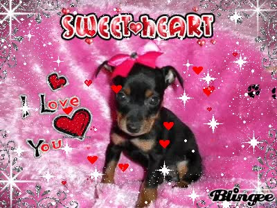 Watch and share Baby Min Pin GIFs on Gfycat