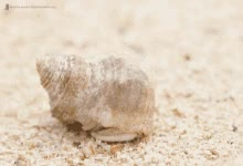 Watch Hermit Crab GIF on Gfycat. Discover more related GIFs on Gfycat