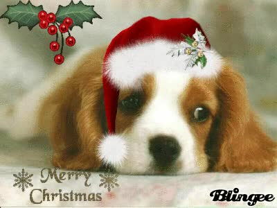 Watch and share Sad Christmas Dog GIFs on Gfycat
