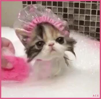 Watch and share 07 GIFs by pierdze po kotach on Gfycat