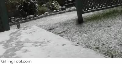 Watch and share First Snow GIFs on Gfycat