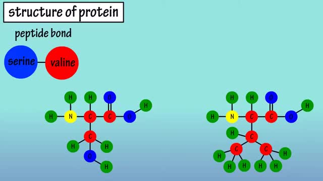 Watch and share Protein Structure GIFs and What Is Protein GIFs by Gabrielly Mendes on Gfycat