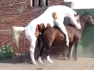 Watch and share HORSES FUCK GIFs on Gfycat