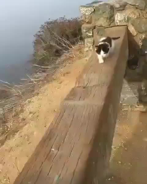Watch and share Making The Climb GIFs by tothetenthpower on Gfycat